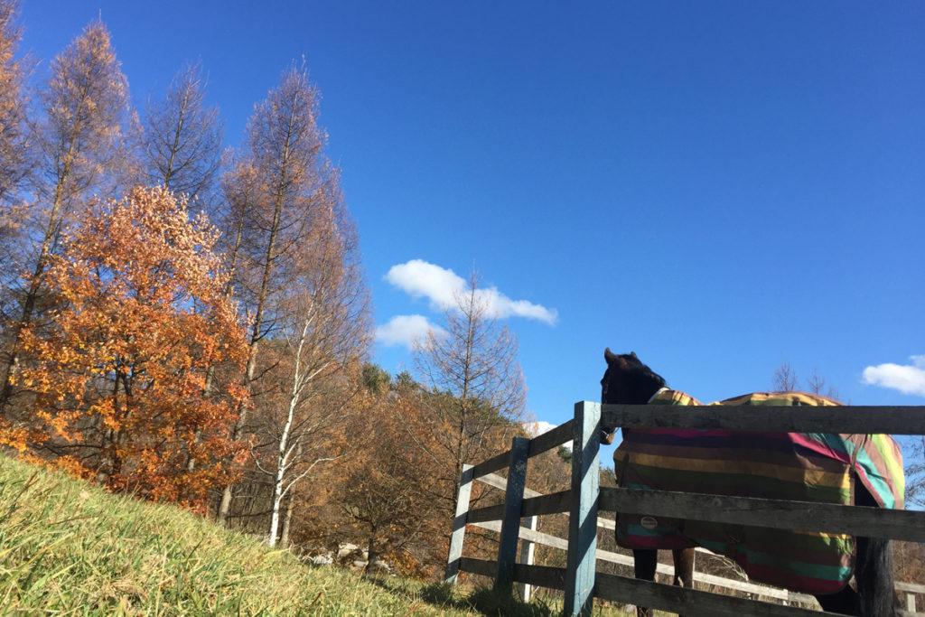 谷口牧場養老牧場で空を見る馬の写真
