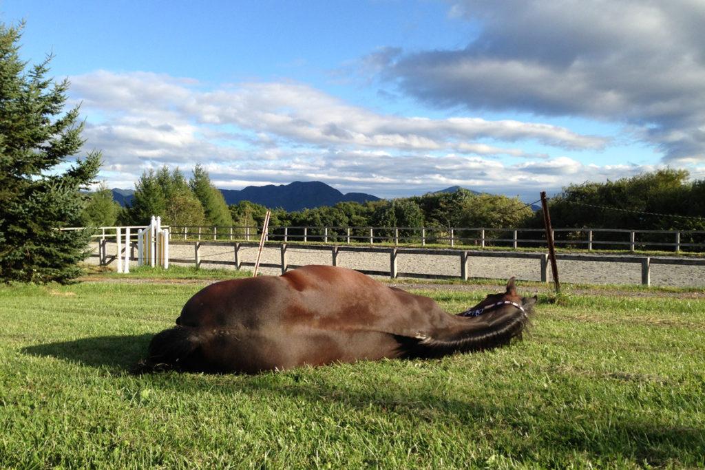 谷口牧場養老牧場で寝る馬の写真
