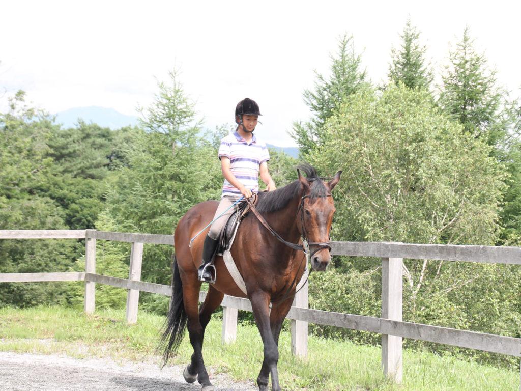 谷口牧場養老牧場で歩く馬の写真