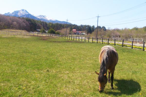 谷口牧場で放牧されている馬の写真