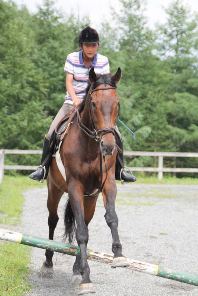 谷口牧場養老牧場で走る馬の写真