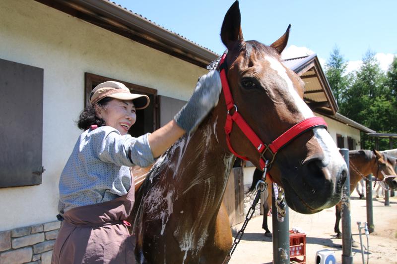 谷口牧場養老牧場でなでられる馬の写真