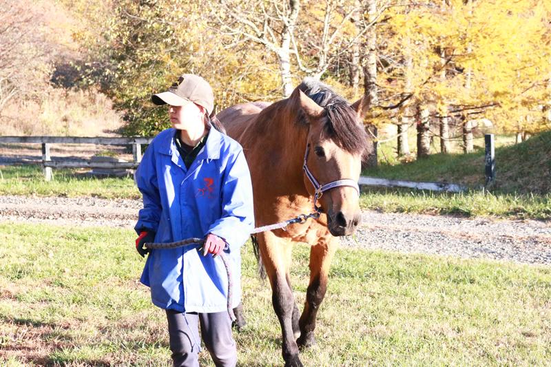 谷口牧場養老牧場で馬の世話をしている女性の写真