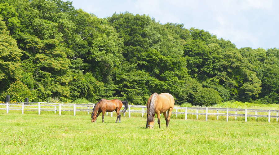 谷口牧場養老牧場で放牧中の馬の写真