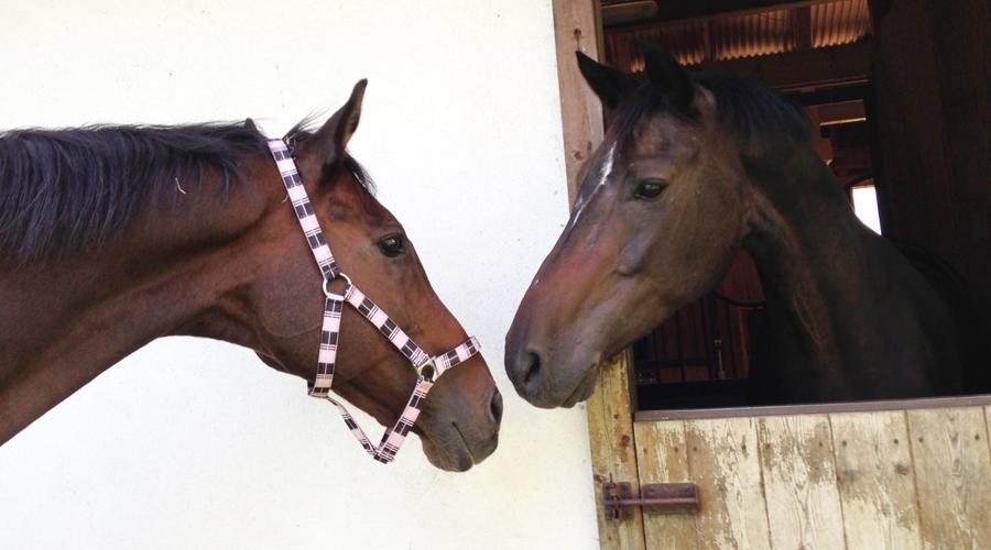 谷口牧場養老牧場で馬2頭の写真