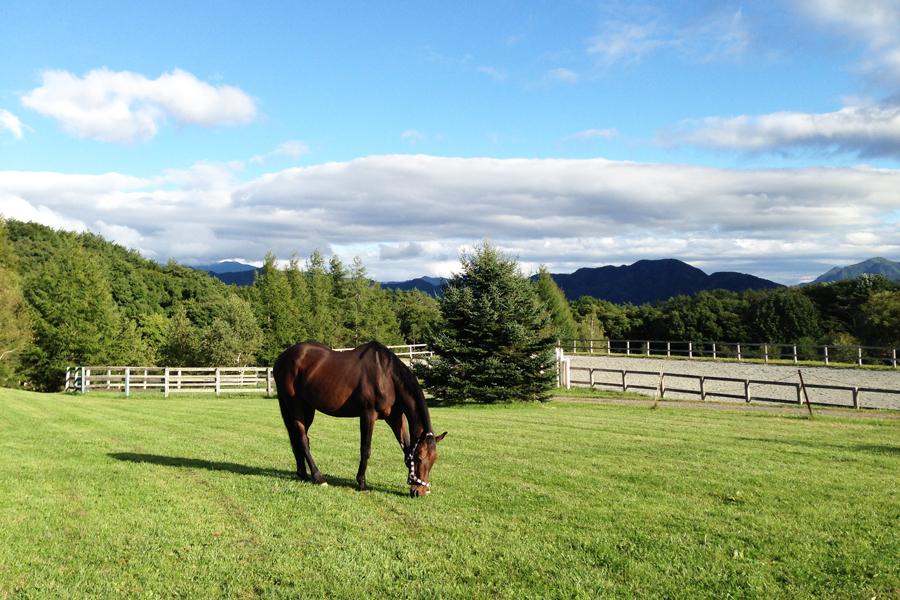 谷口牧場養老牧場で過ごす馬の写真