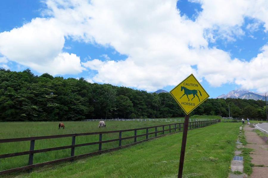 谷口牧場養老牧場の放牧中の馬の写真