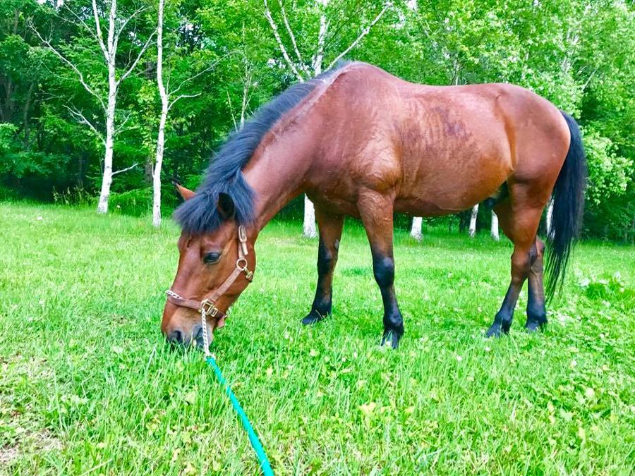 谷口牧場で草を食べる馬の写真