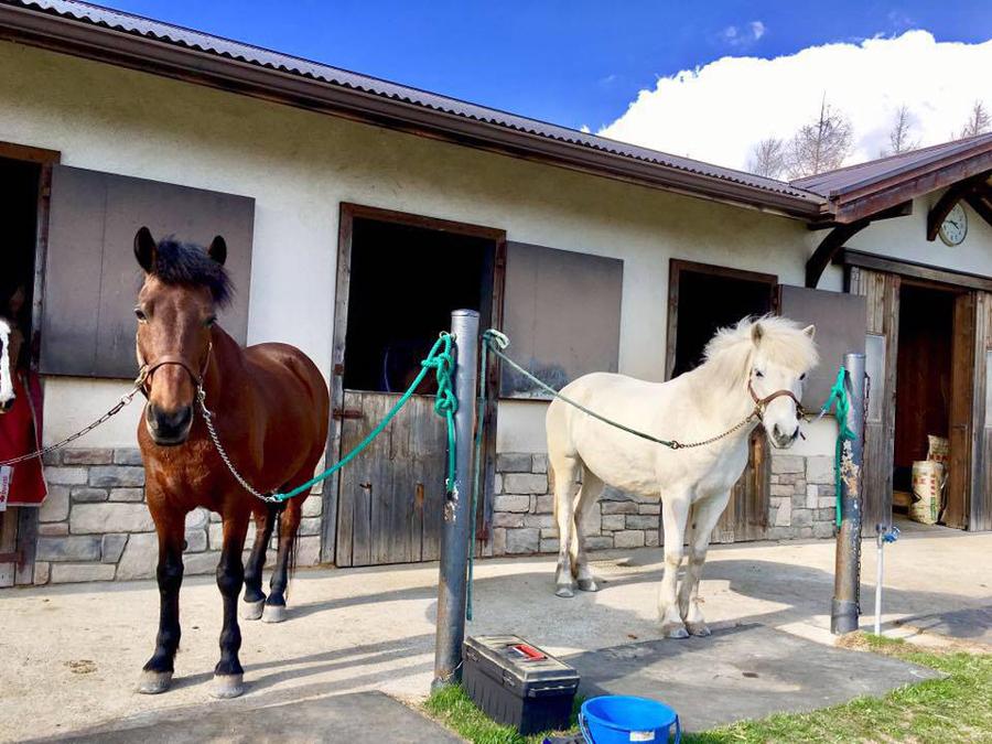 谷口牧場で並んでる馬の写真