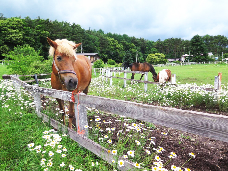 谷口牧場のポニーの写真