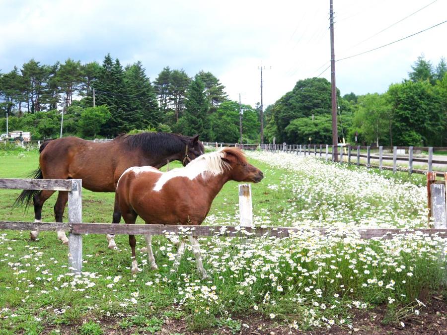 谷口牧場の放牧場の写真