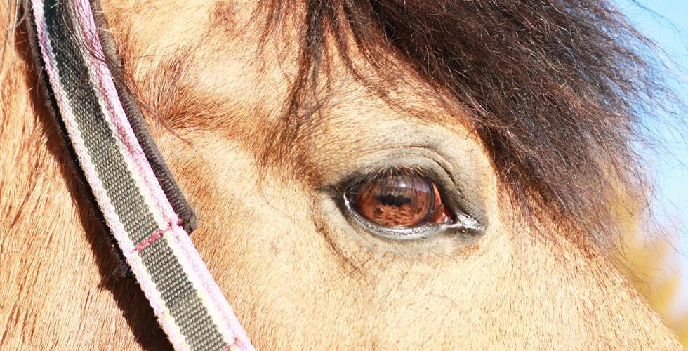 谷口牧場養老牧場にいるかわいい目の馬の写真
