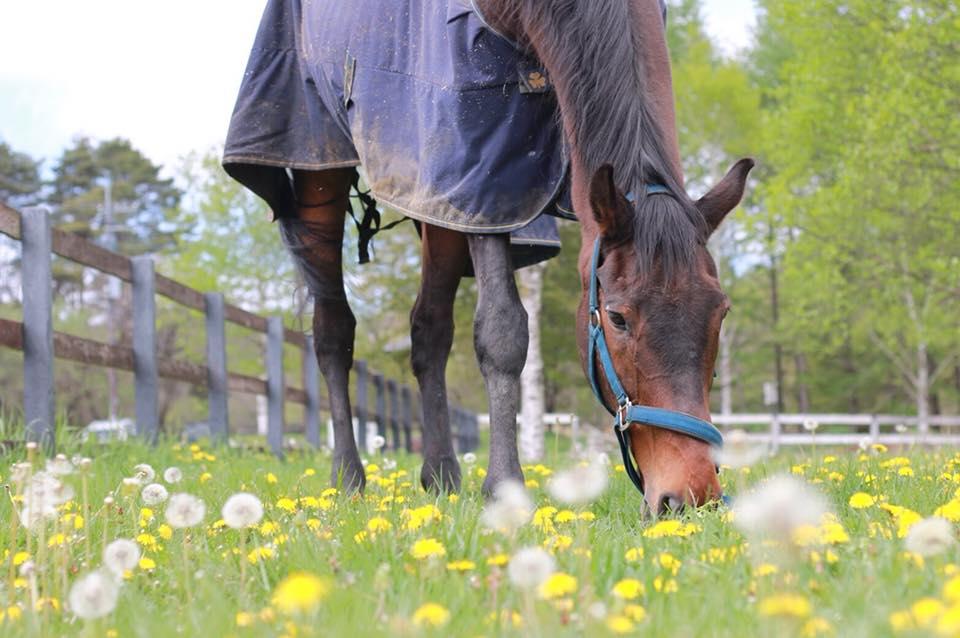 谷口牧場にいる馬のの写真